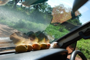 Mangos on dashboard