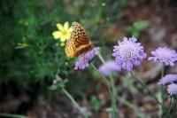 YellowButterfly.jpg